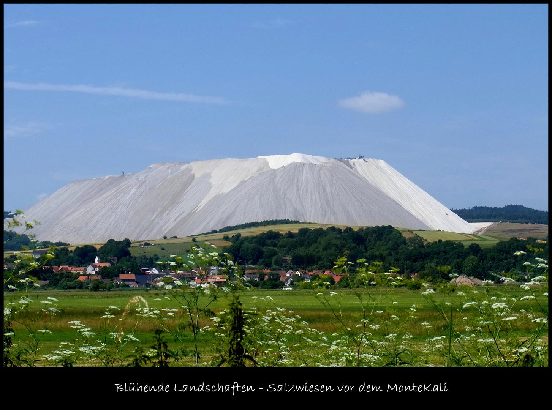 Blühende Salzwiesen durch Kalibergbau