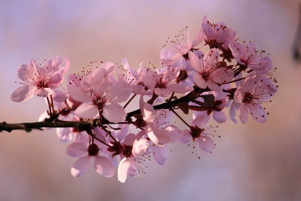 Blühende Schönheit