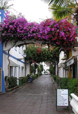 Blühende Strasse