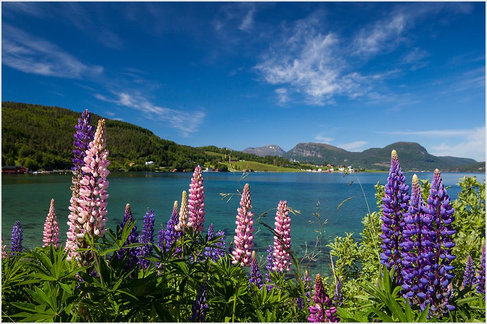 Blühender Fjord