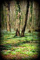 Blühender Wald