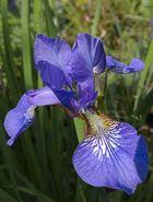 Blühendes in unserem Garten (5)