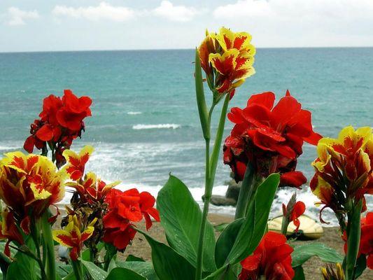 Blühendes Meer