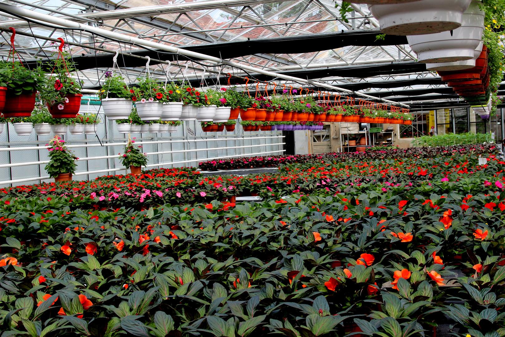 Blühendes Sachsen-Tag der offenen Gärtnerei