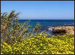 Blühendes Zypern