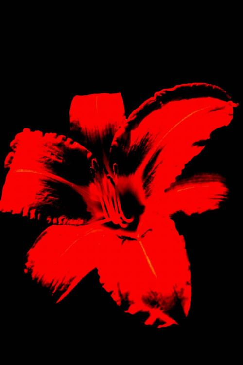 Blüht