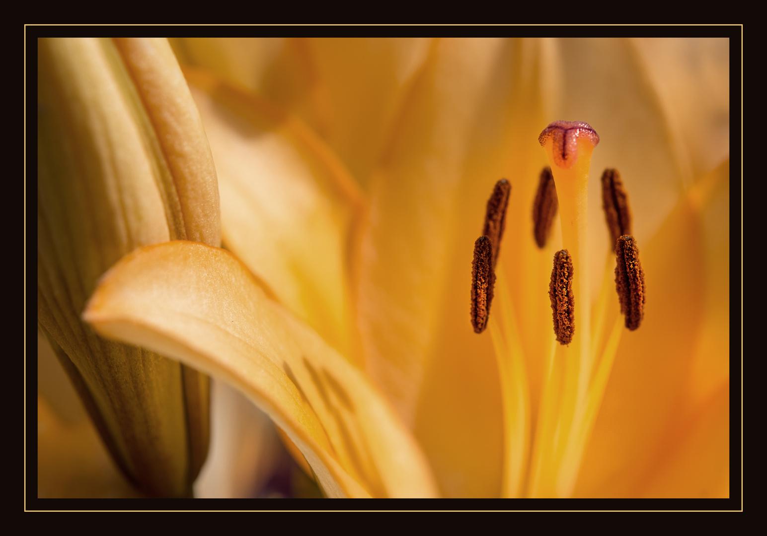 Blühten Stempel