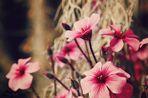 Blühtezeit
