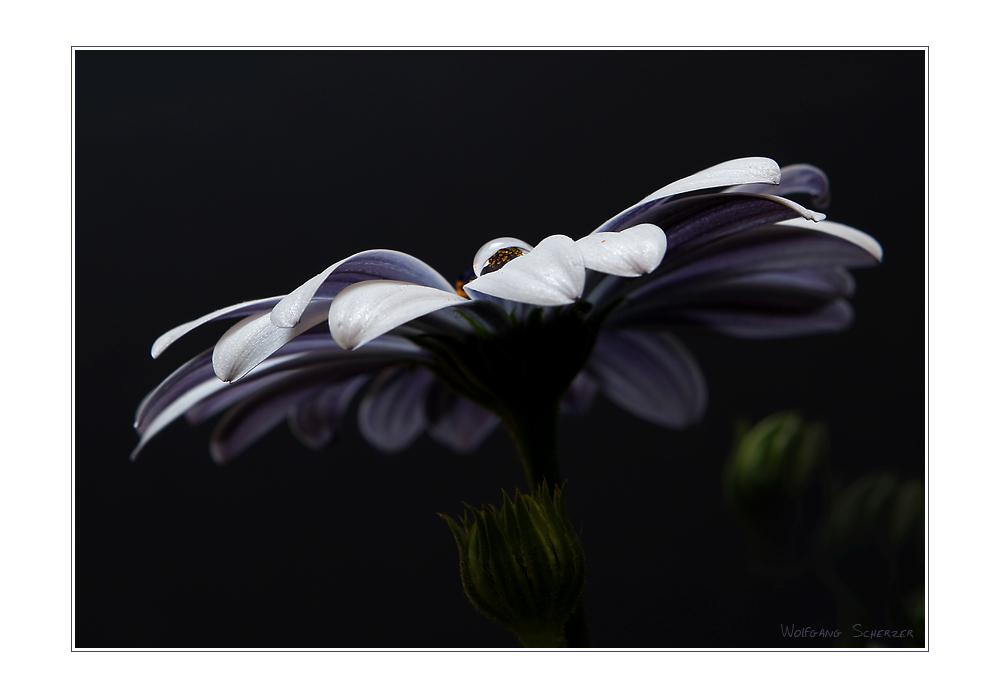 Blühtropfen