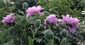 Blühwechsel- Anfang und Ende von Uschi Pechloff