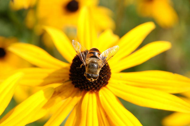 Blümchen mit Bienchen