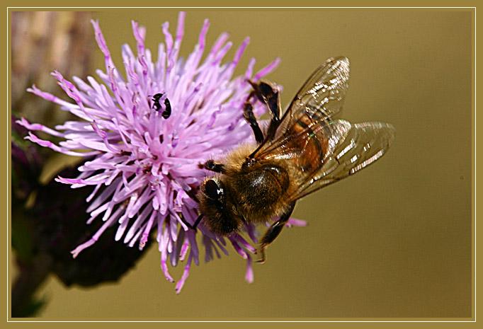 Blümchen und Bienchen #1