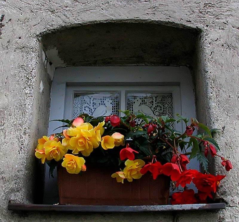 Bluemchenfenster