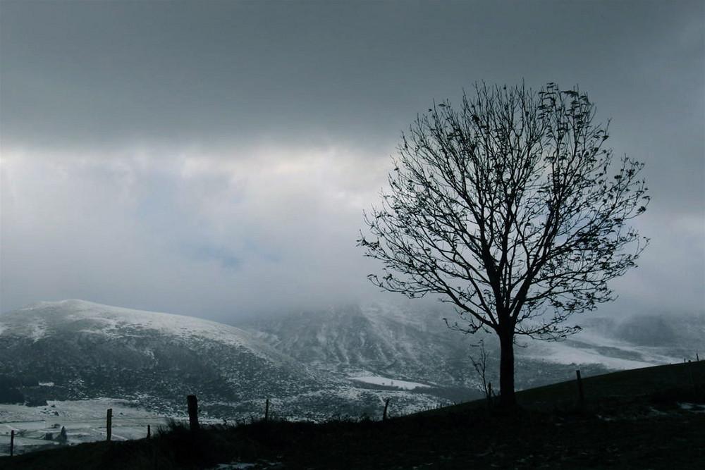 Blues hivernal
