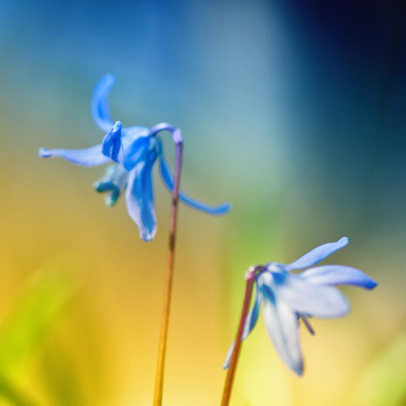 Blue.Spring