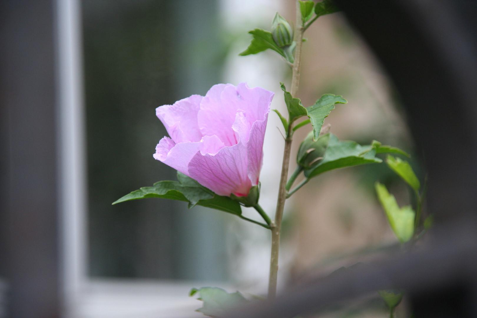 Blüt in Nachbars Garten