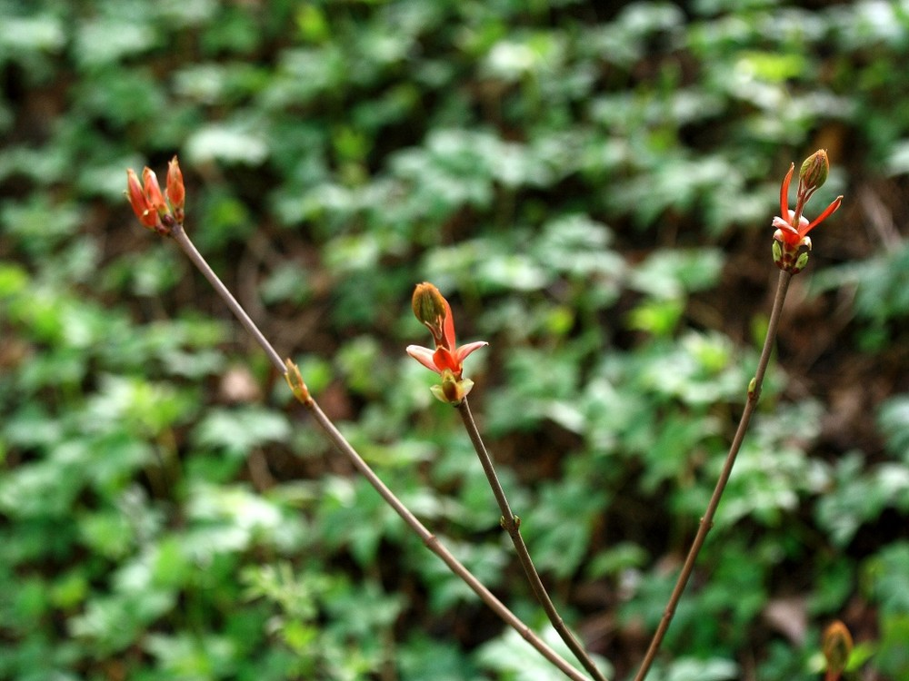 Blüte (02)