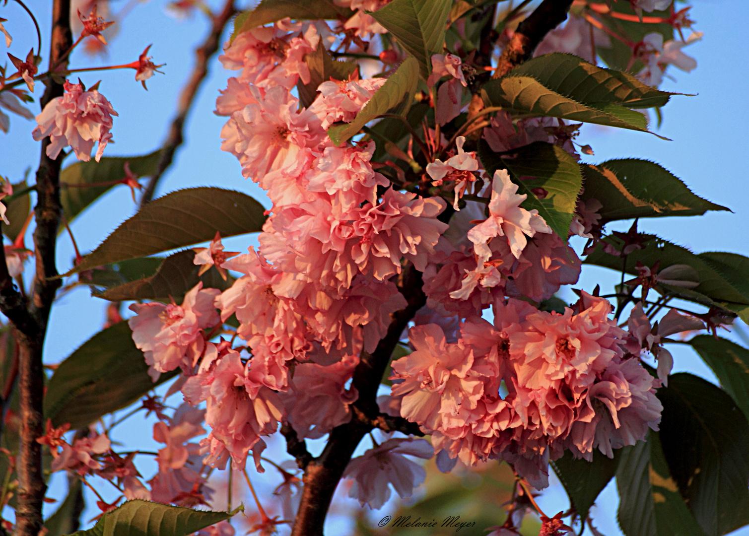 Blüte (1)