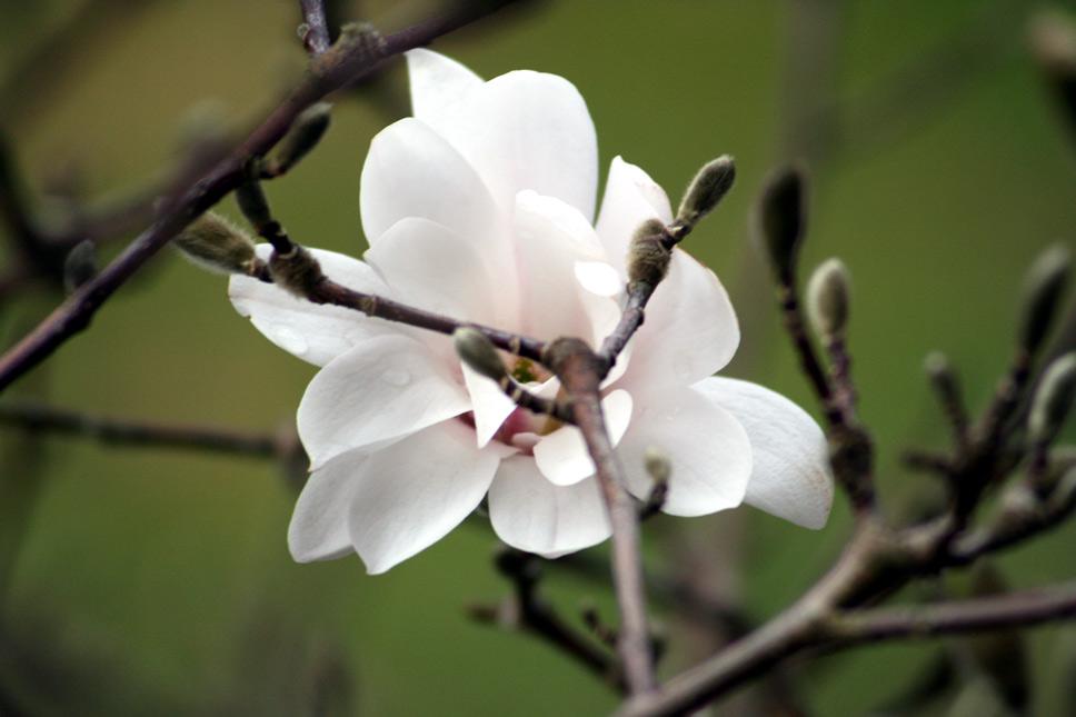 Blüte 1. Versuche