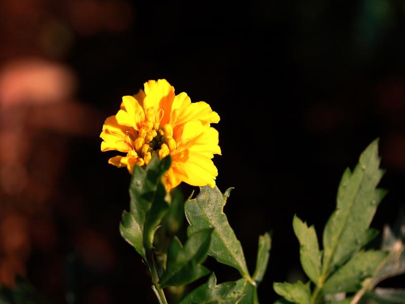 Blüte (12)