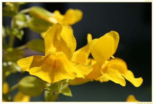 Blüte :-)