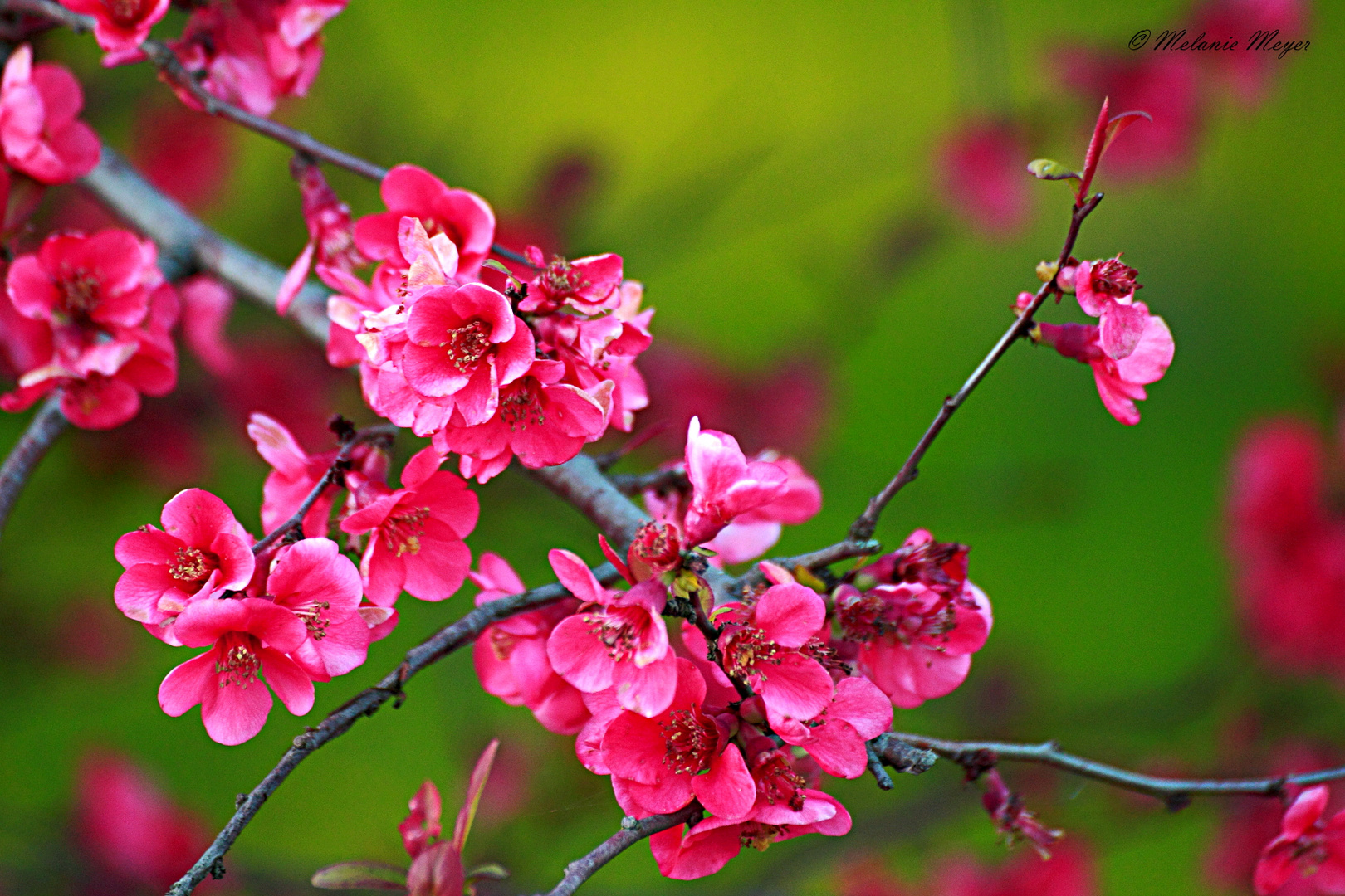 Blüte (2)
