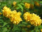 Blüte 2