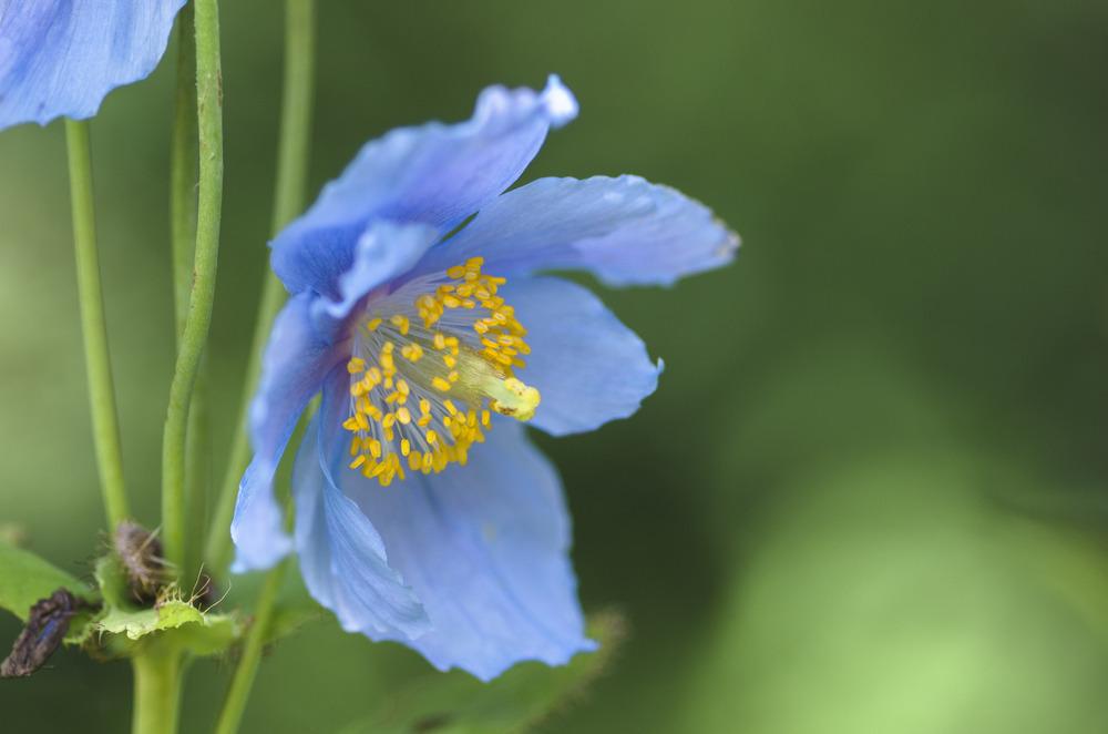 Blüte #3