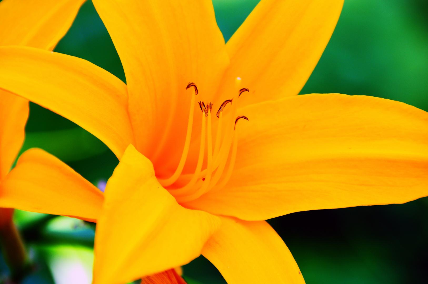 Blüte-4