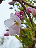 Blüte :)