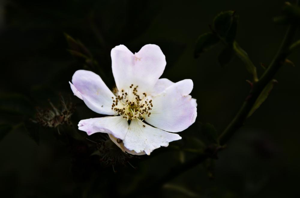Blüte am Abend