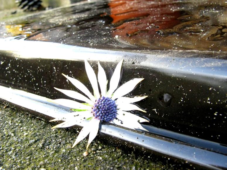 Blüte an an Backblech, nach Regen