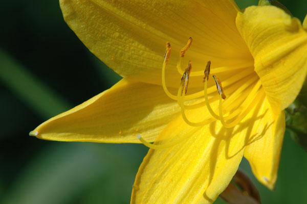 Blüte (Art noch nicht bestimmt)