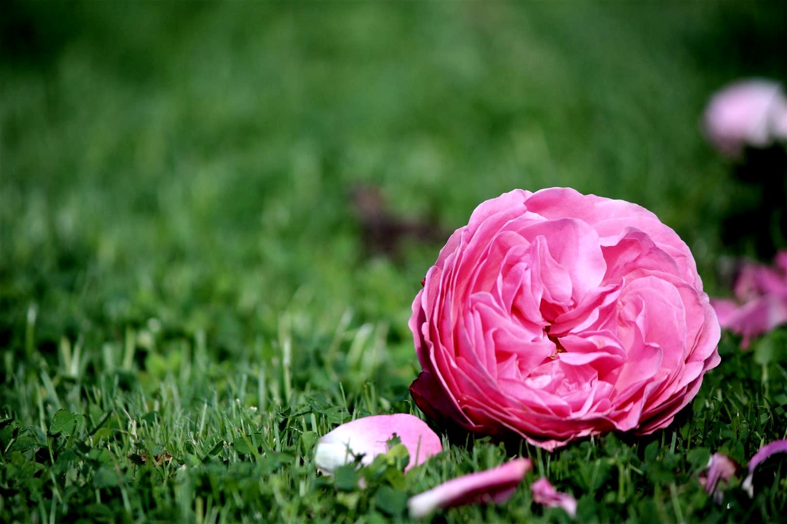 Blüte auf dem Boden, trotzdem eine Schönheit