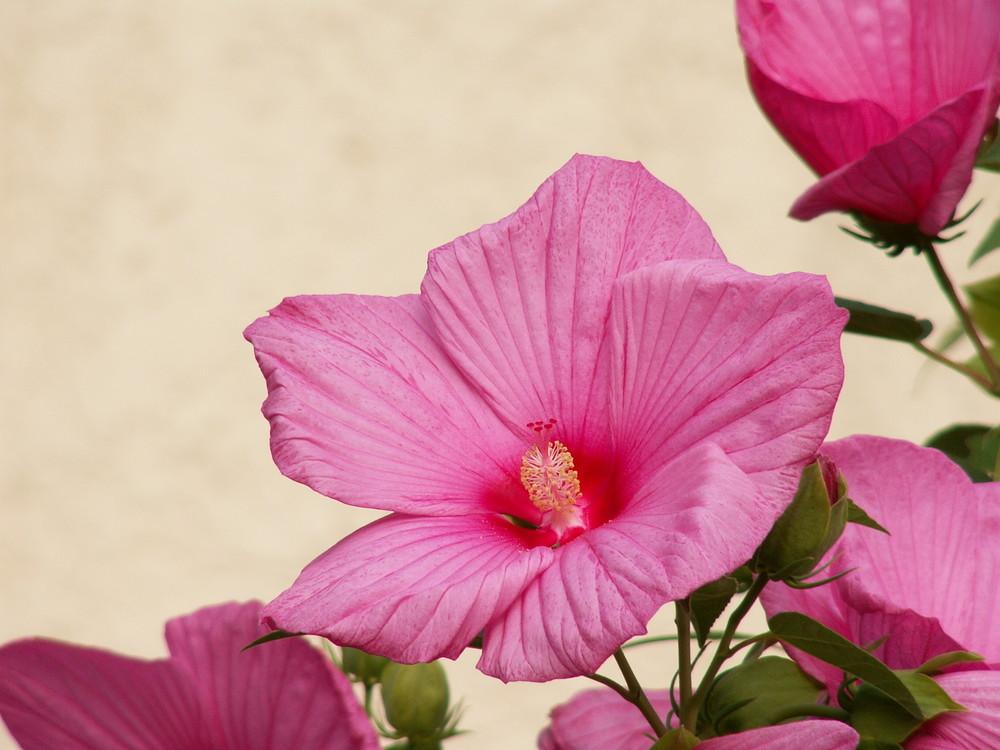 Blüte aus Hochhausen
