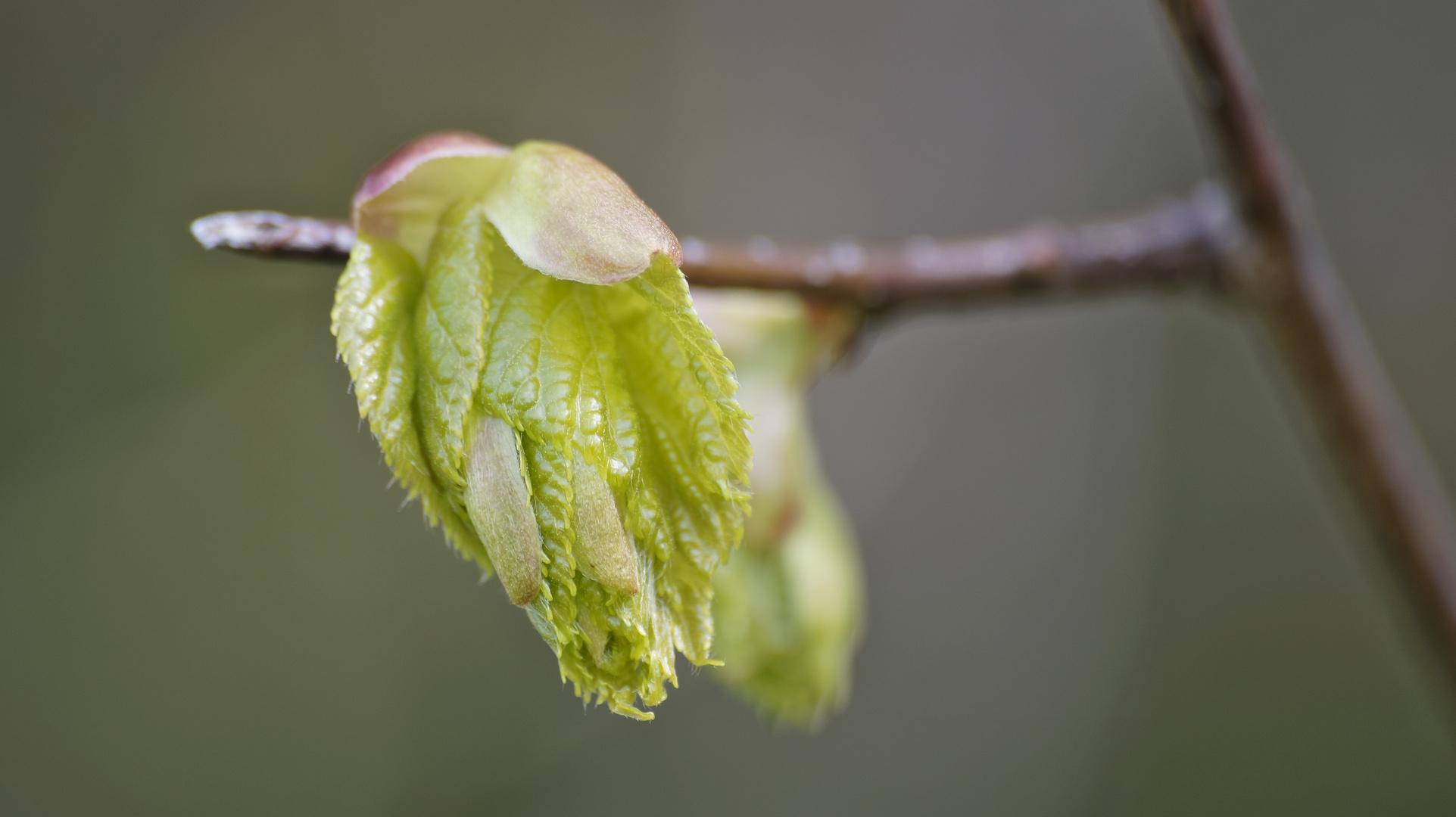 Blüte; Baum unbekannt