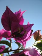 Blüte bei Gegenlicht