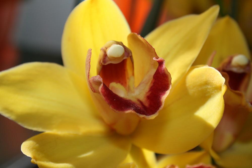 Blüte, bezaubernd