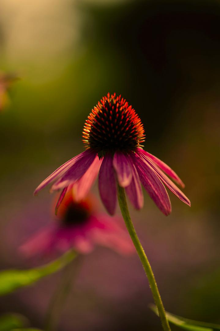 Blüte (Botanischer Garten)