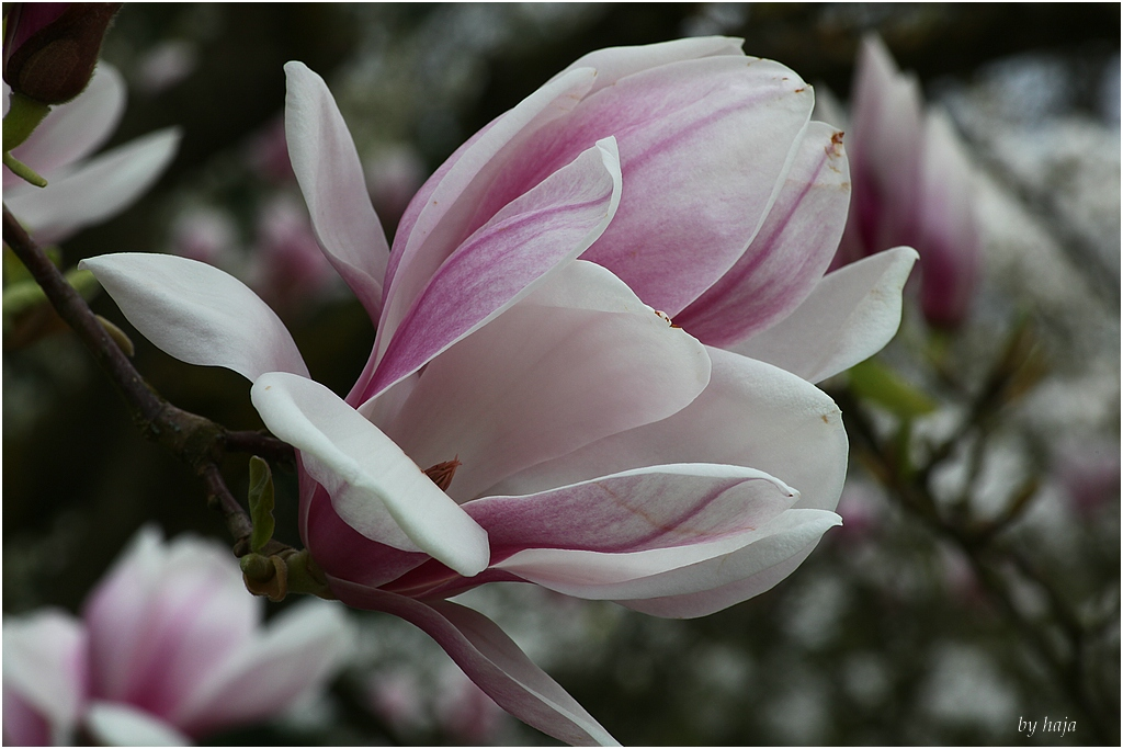 Blüte,,,