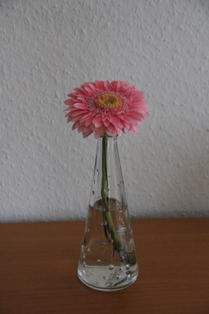 Blüte der Hoffnung
