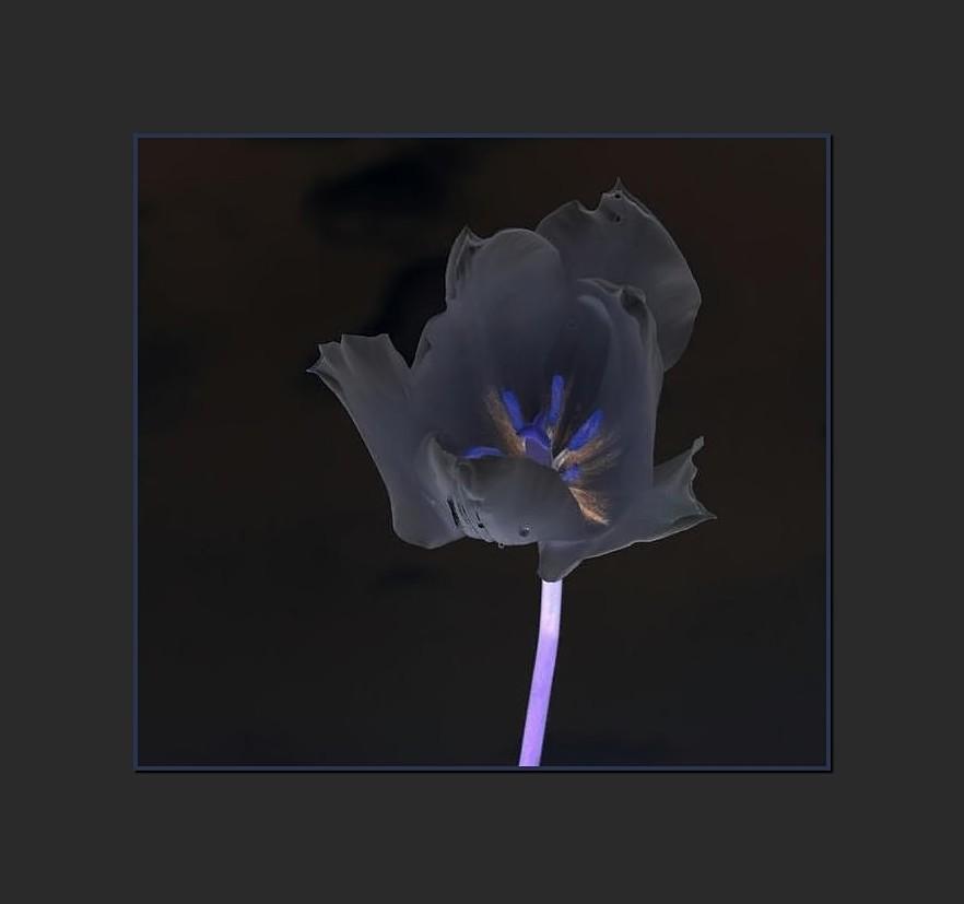 Blüte der Nacht