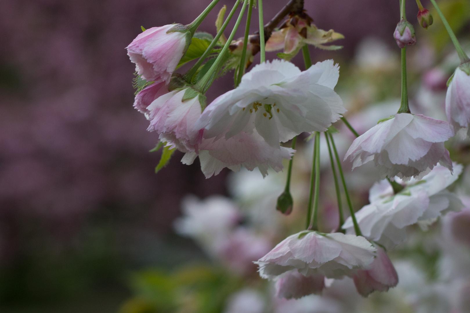 Blüte des Frühlings