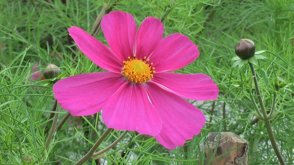 Blüte en detail