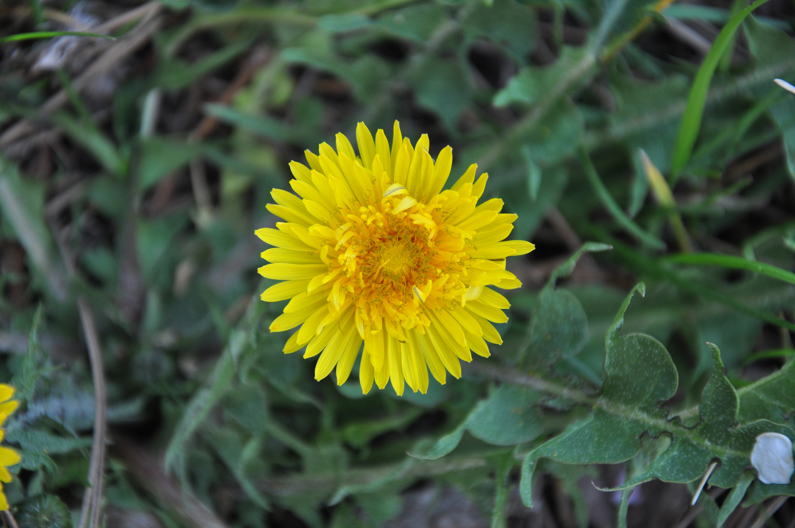 Blüte Frühling 2014