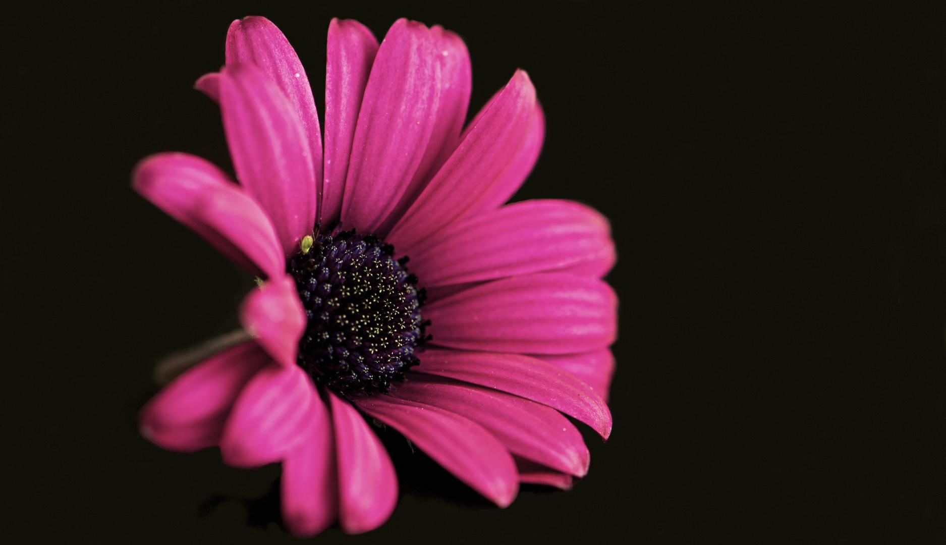 Blüte für sich