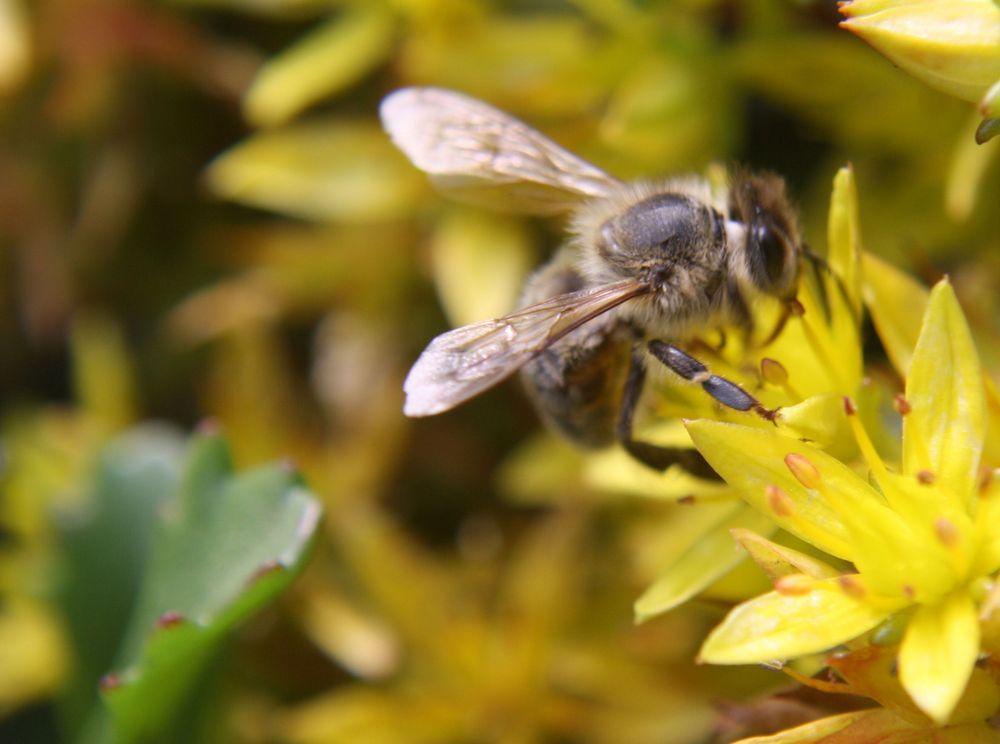 Blüte gibt Honig von MBorst