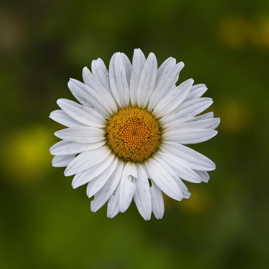 Blüte (hoffentlich setzt sich bald der Frühling durch)