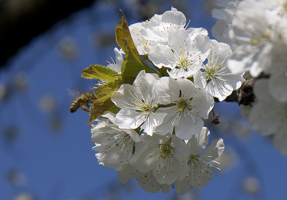Blüte I
