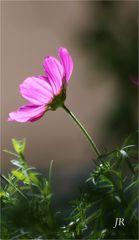 Blüte im abendlichen Gegenlicht